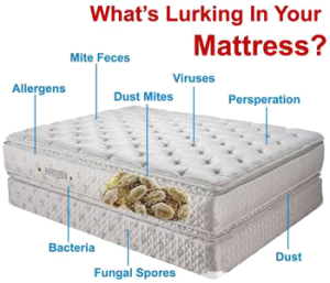 mattress cleaning services singapore expert